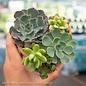 Tropical 4P Terracotta Heart w/ Succulent Combo