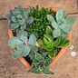 Tropical 6P Terracotta Heart w/ Succulents Combo