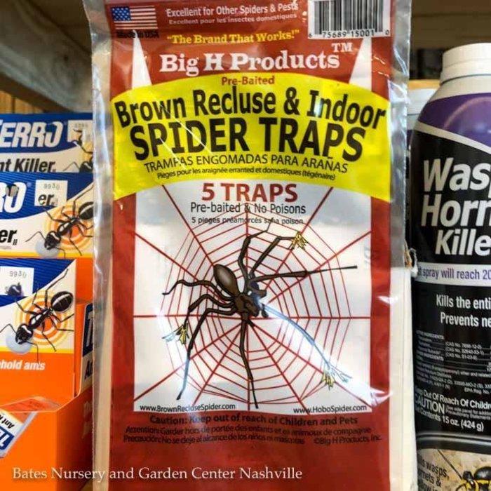 Brown Recluse & Indoor Spider Trap  X