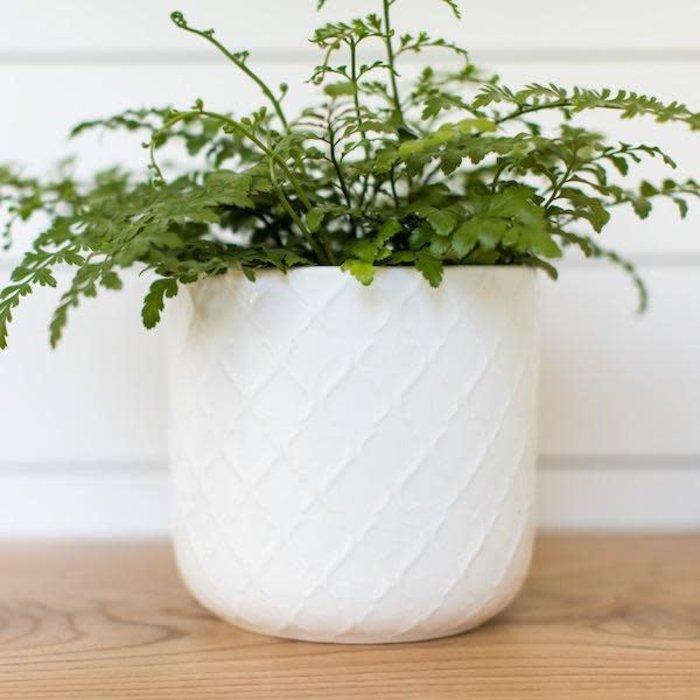 Pot Oralie Lattice Cylinder 6x7 White