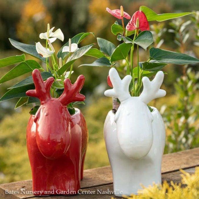 Pot Reindeer Glazed 10x4x9 Asst