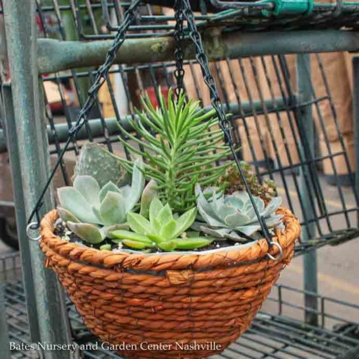10Hb! Foliage Succulent Combo Hanging Basket /Tropical