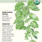 Seed Basil Italian Genovese Organic Heirloom - Ocimum basilicum