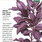 Seed Basil Purple Petra Organic - Ocimum basilicum