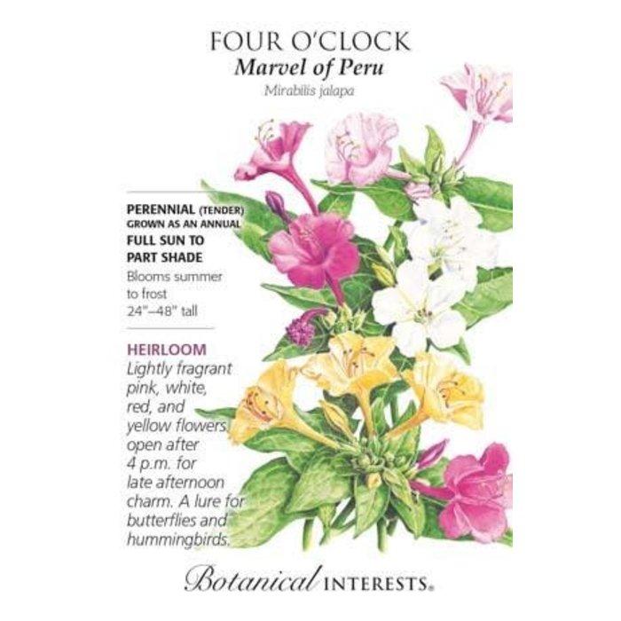 Seed Four O'Clock Marvel of Peru Heirloom - Mirabilis jalpa