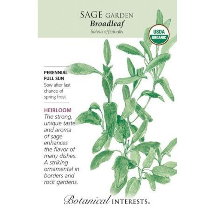 Seed Sage Broadleaf Organic Heirloom - Salvia officinalis