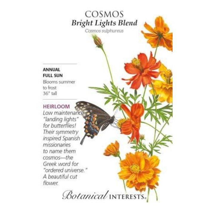 Seed Cosmos Bright Lights Blend Heirloom - Cosmos sulphureus