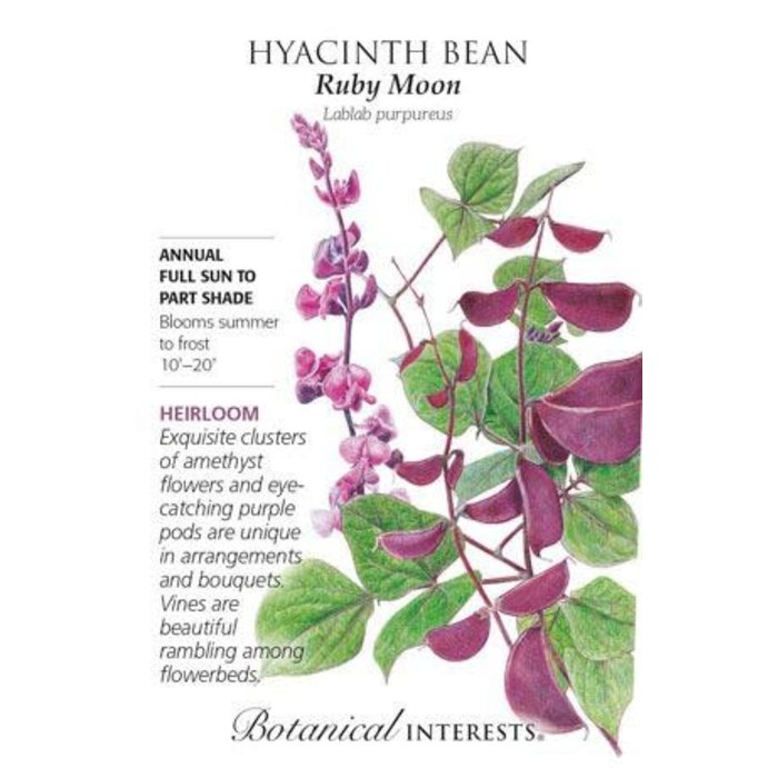 Seed Hyacinth Bean Ruby Moon Heirloom - Lablab purpureus
