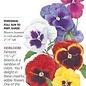 Seed Pansy Swiss Giant Blend Heirloom - Viola wittrockiana