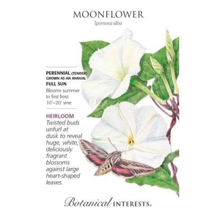 Seed Moonflower Heirloom - Ipomoea alba