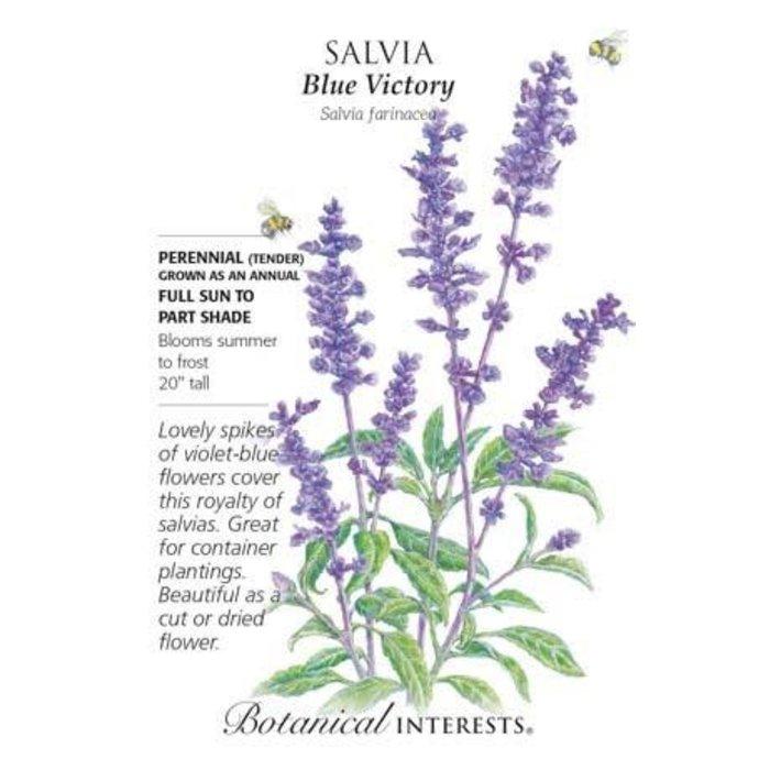 Seed Salvia Blue Victoria - Salvia farinacea