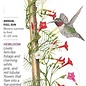 Seed Cypress Vine Funny Valentine Blend Heirloom - Ipomoea quamoclit