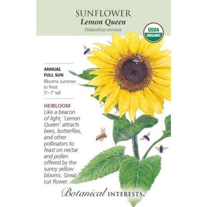 Seed Sunflower Lemon Queen Organic Heirloom - Helianthus annuus