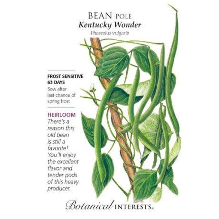Seed Bean Pole Kentucky Wonder Heirloom - Phaseolus vulgaris