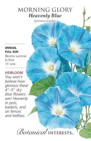 Seed Morning Glory Heavenly Blue Heirloom - Ipomoea tricolor