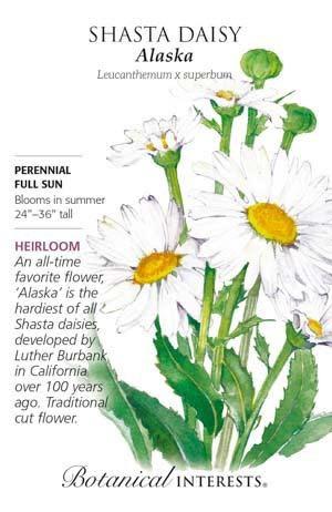 Seed Shasta Daisy Alaska Heirloom - Leucanthemum x superbum