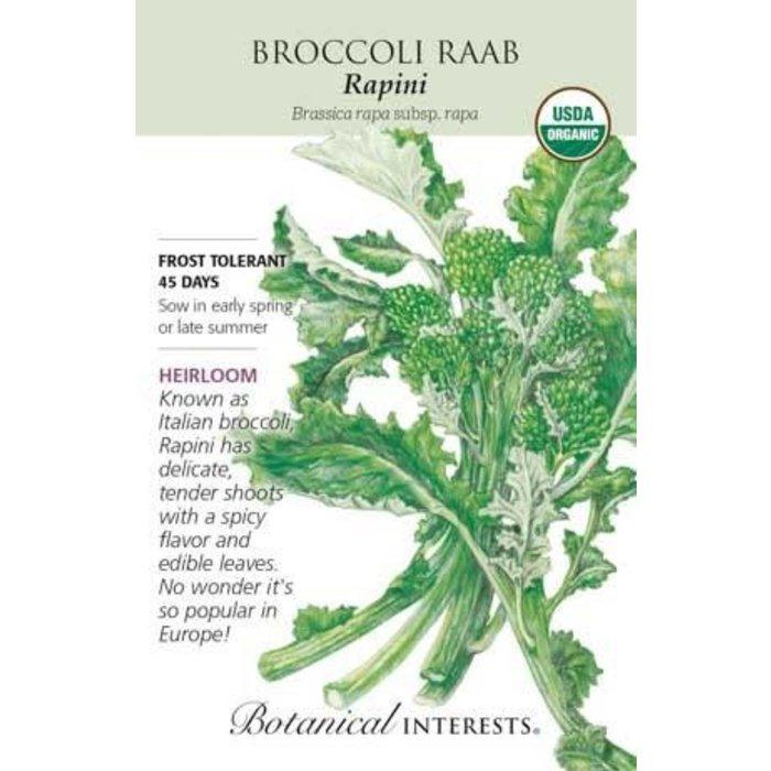 Seed Broccoli Raab Rapini Organic Heirloom - Brassica rapa