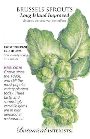 Seed Brussels Sprouts Long Island Improved Heirloom - Brassica oleracea (Gemmifera group)