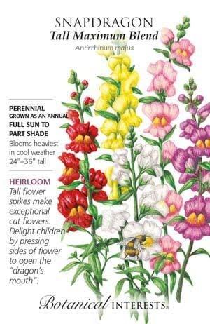 Seed Snapdragon Tall Maximum Blend Heirloom - Antirrhinum majus