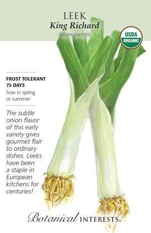 Seed Leek King Richard Organic - Allium ampeloprasum