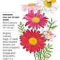 Seed Painted Daisy Robinson's Blend - Tanacetum coccineum