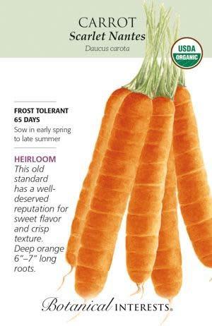 Seed Carrot Scarlet Nantes Organic Heirloom - Daucus carota sativus