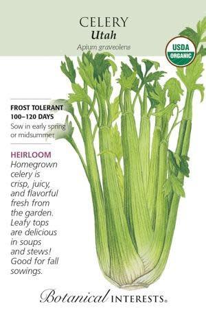 Seed Celery Utah Organic Heirloom - Apium graveolens