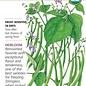 Seed Bean Bush Blue Lake 274 Organic Heirloom - Phaseolus vulgaris