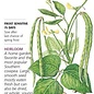 Seed Bean Southern Cowpea California Blackeye Heirloom - Vigna unguiculata