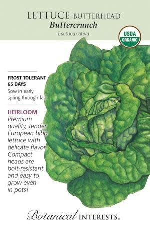 Seed Lettuce Butterhead Buttercrunch Organic Heirloom - Lactuca sativa