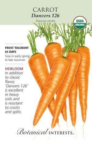 Seed Carrot Danvers 126 Organic Heirloom - Daucus carota