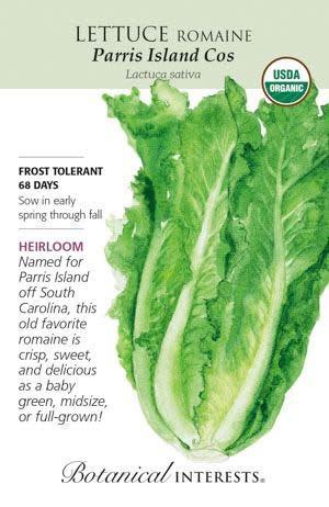 Seed Lettuce Romaine Parris Island Cos Organic Heirloom - Lactuca sativa