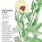 Seed Okra Clemson Spineless 80 - Abelmoschus esculentus
