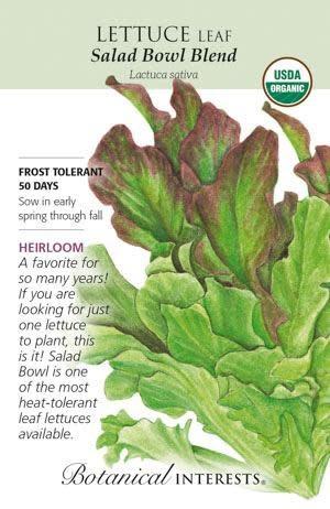 Seed Lettuce Leaf Salad Bowl Blend Organic Heirloom - Lactuca sativa