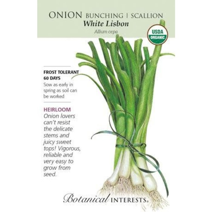 Seed Onion Bunching/Scallion White Lisbon Organic Heirloom - Allium cepa