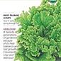 Seed Lettuce Leaf Black Seeded Simpson Organic Heirloom - Lactuca sativa