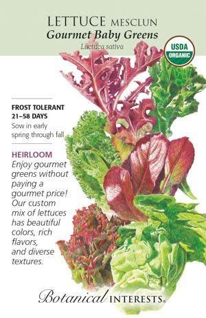 Seed Lettuce Mesclun Gourmet Baby Greens Organic Heirloom - Lactuca sativa