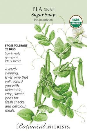 Seed Pea Snap Sugar Snap Organic - Pisum sativum