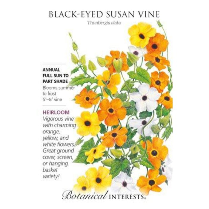 Seed Black-Eyed Susan Vine Heirloom - Thunbergia alata