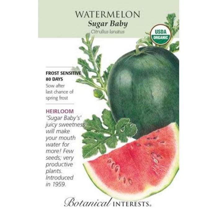 Seed Watermelon Sugar Baby Organic Heirloom - Citrullus lanatus