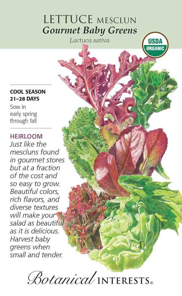 Seed Lettuce Mesclun Gourmet Baby Greens Organic Heirloom - Lactuca sativa - Lrg Pkt