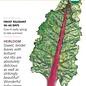 Seed Swiss Chard Ruby Red/Rhubarb Organic Heirloom - Beta vulgaris (Cicla group)