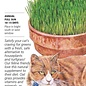 Seed Cat Grass Oats - Avena sativa - Lrg Pkt