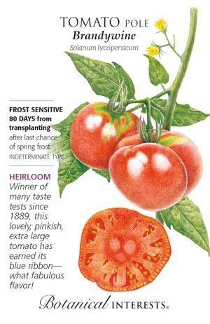 Seed Tomato Pole Brandywine Heirloom - Lycopersicon lycopersicum