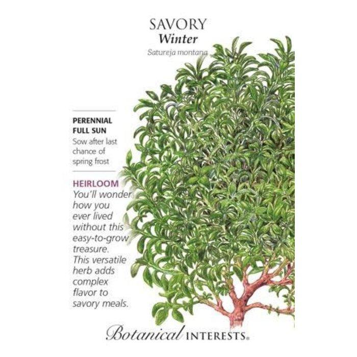 Seed Savory Winter Heirloom - Satureja montana