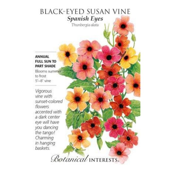 Seed Black-Eyed Susan Vine Spanish Eyes - Thunbergia alata