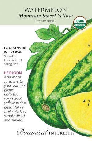 Seed Watermelon Mountain Sweet Yellow Organic Heirloom - Citrullus lanatus