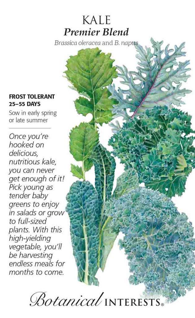 Seed Kale Premier Blend - Brassica oleracea Lrg Pkt