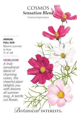 Seed Cosmos Sensation Blend Heirloom - Cosmos bipinnatus