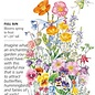 Seed Flower Mix Fairy Meadow - Assorted species
